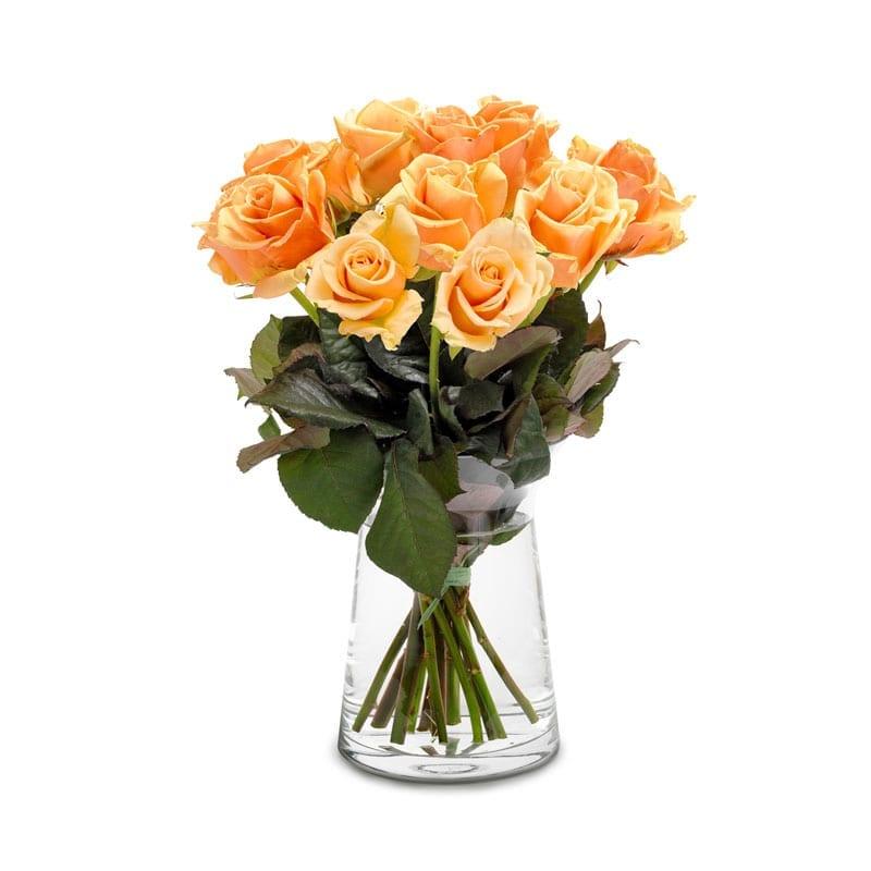abrikooskleurige rozen