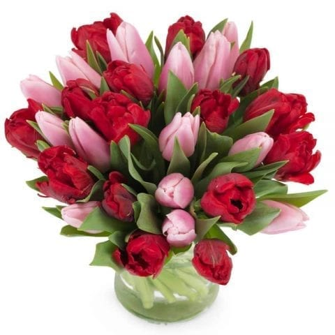 Liefdevolle Tulpen